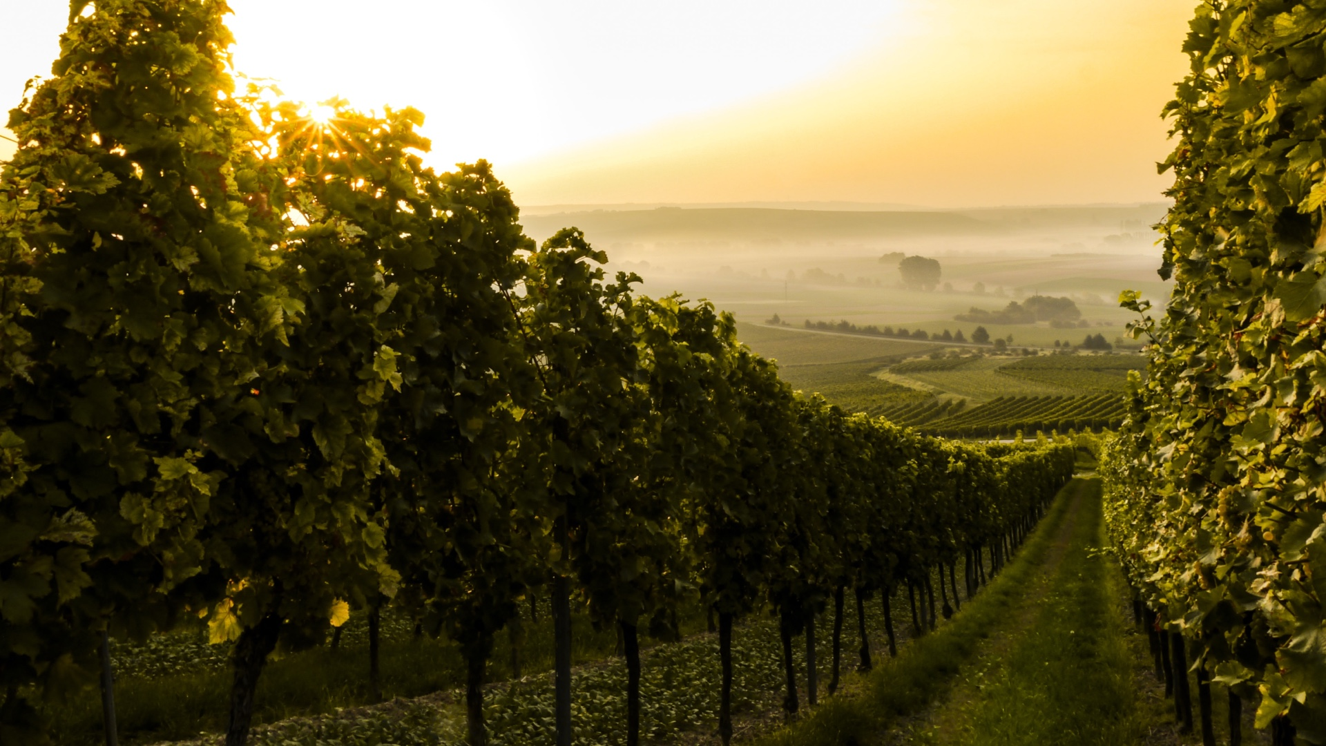 Vinhos biodinâmicos: menos quantidade e mais qualidade